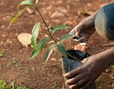 African girl feeling the leaf of a tree that's about to be planted