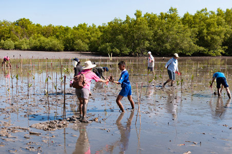 Planting Mangroves in Indonesia